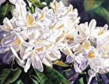 White Rhododendron (Sharon Freeman) - Masterpiece Jigsaw Puzzle 500pc