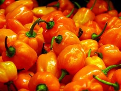 Habanero-Pepper-Among-the-Hottest-200-Seeds-By-Jays-Seeds-Upc-643451294668