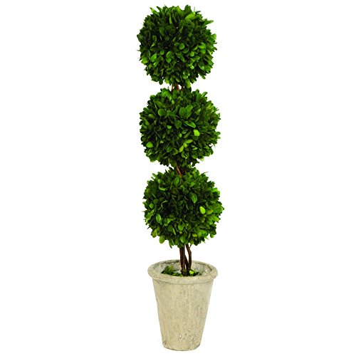 - Tradingsmith Preserved Boxwood Triple Ball Topiary - 26