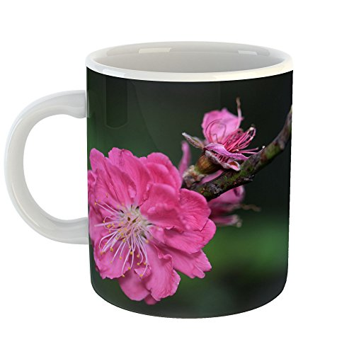 - Westlake Art - Blossom Cherry - 11oz Coffee Cup Mug - Modern Picture Photography Artwork Home Office Birthday Gift - 11 Ounce (9477-C275C)