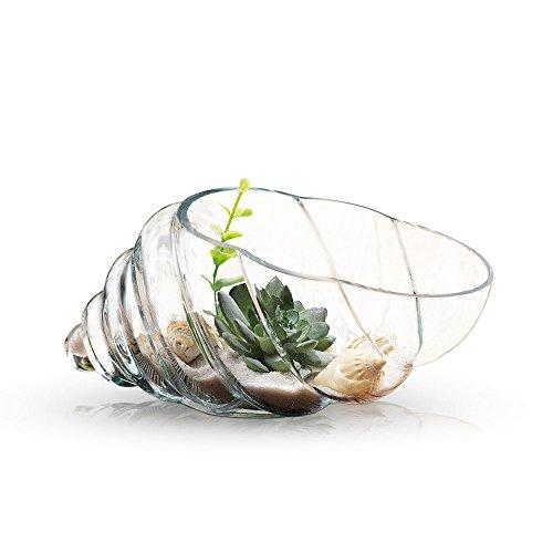 m Vase, Planter Bowl with Succulents and Decorative Stones - Decorative Centerpiece (Shell Shape) (Glass Decorative Bowl)