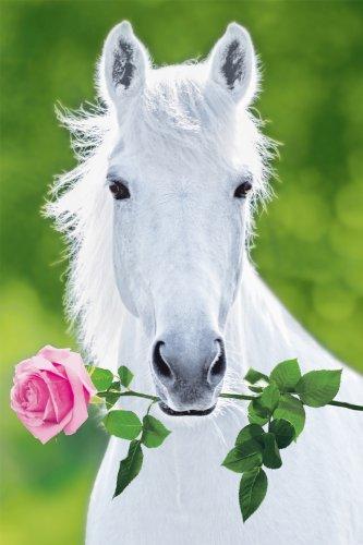Studio B White Horse Poster