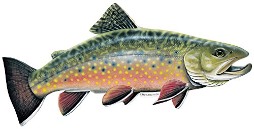 Brook Trout Fish Decal Sticker ~ Fishing & Wildlife Series (Large-17 x 7-Facing as Shown) ()