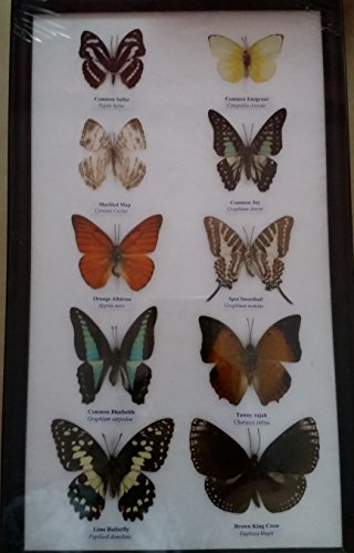 picture-frames-home-decor-real-10-mix-butterflies-collection-taxidermy-framed