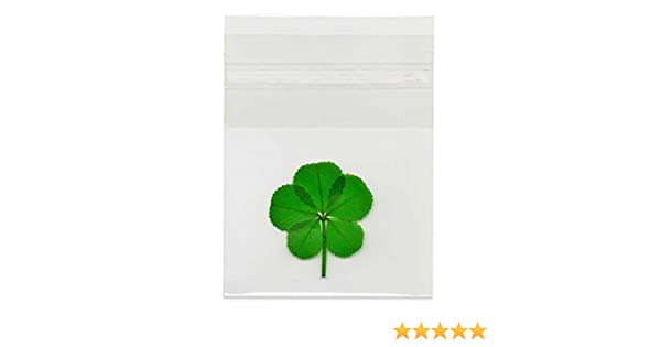Amazon Real 5 Leaf Clover In Cello Sleeve Everything Else