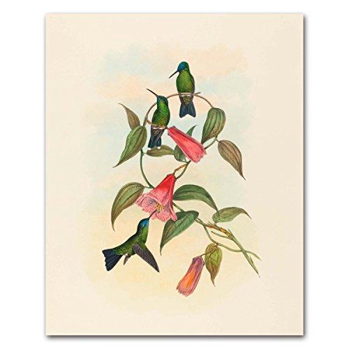 hummingbird-art-john-gould-print-bird-wall-decor-vintage-home-living-room-wood-nymph-unframed