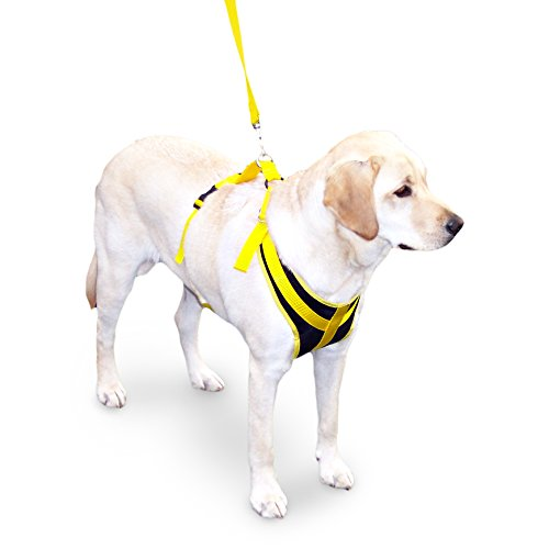 Walkin' Front Safety Dog Harness