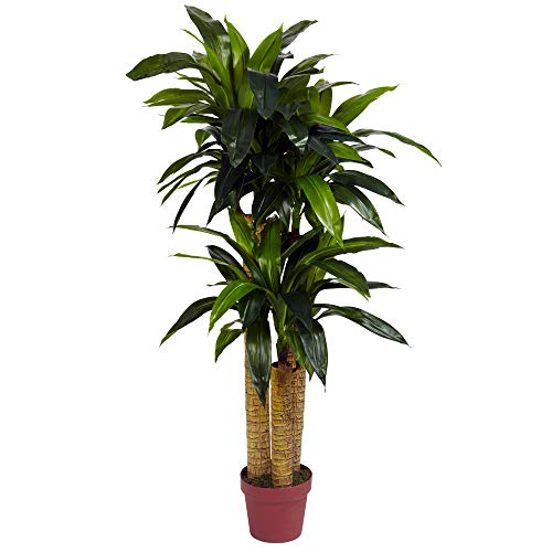 Decorative House Plants - Nearly Natural 6648 Corn Stalk Dracaena Decorative Silk Plant, 4-Feet, Green