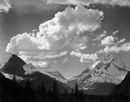 Posterazzi Poster Print Collection Trees in Glacier Montana-National Parks and Monuments 1941 Ansel Adams, (11 x 14), Multicolored