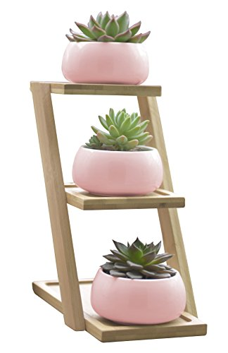 Jusalpha Ceramic Modern Decorative Small Round Succulent Plant Pot w/ 3 Tier Bamboo Stand-Window Display-Home Decoration (Planter 01 Pink)