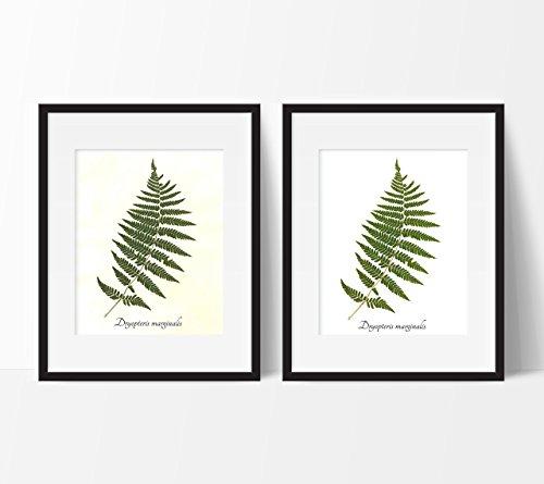 Marginal Wood Fern Botanical Print - Pressed Fern Herbarium Print (Fern Wood Garden)