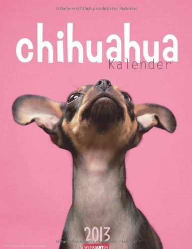 Chihuahua Kalender 2013