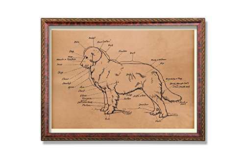 - Dog anatomy print Medical scheme poster Antique animal decor Anatomical art