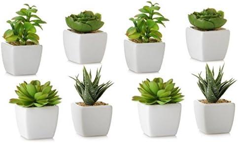 Dcasa - Pack 8 Cactus Artificial plástico 10 cm Maceta de ...