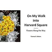 On My Walk into Harvard Square: Flowers along the Way