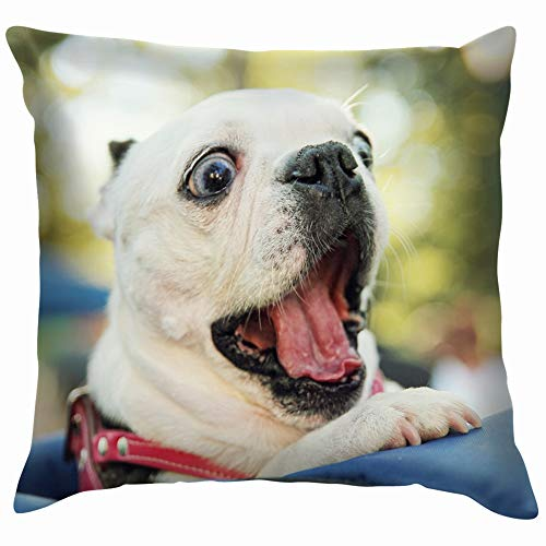 Cute Dog Back Pack Local Park Animals Wildlife Parks Outdoor Pillow Case Throw Pillow Cover Square Cushion Cover 12X12 Inch]()
