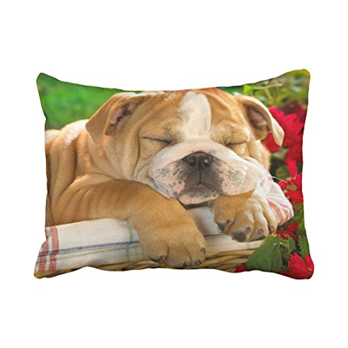 Tarolo Decorative Decorative Throw Pillow Case Animals english bulldog puppy s crate dog Size 20x26 inches(51x66cm) One Sided
