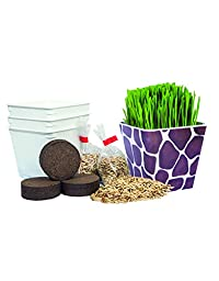 Priscilla\'s Pet Kitty Cat Grass Giraffe Combo (3 Pack Kit) Planter Container