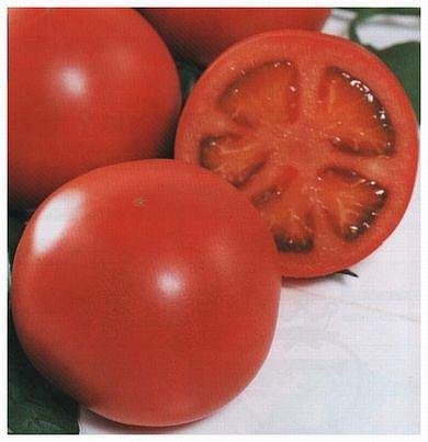 りんか409 トマト種子 (サカタのタネ) 1000粒 B00ANEGJ4E