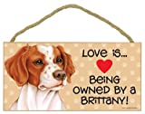 Love is being owned by a Brittany 5