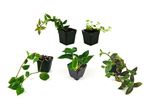 Vine Bundle (5 plants)