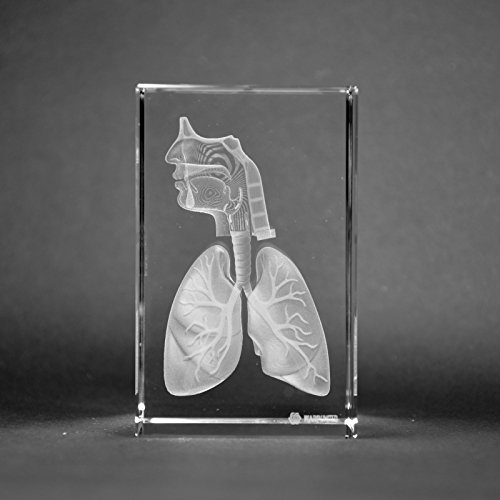 Crystal 3D Human Respiratory Tract 1lb 2 x 2 x 3 Inches Optical Glass Paperweight