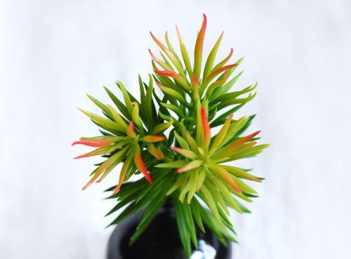 8 capensia bush artificial plant - 4
