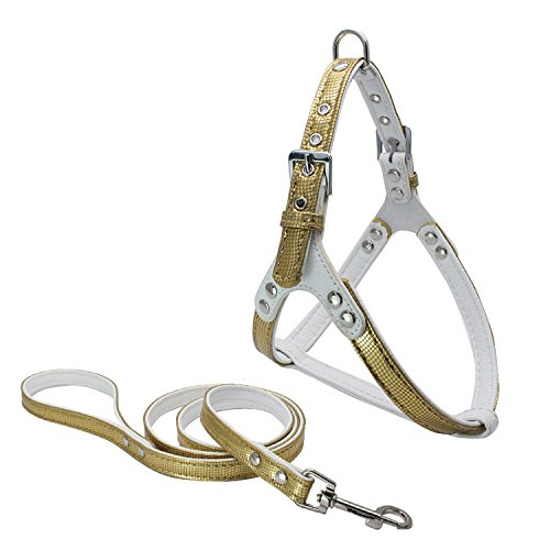 Dogs Kingdom Luxury Leather Pet Harness and Leash For Cats Puppy Small Medium Dogs Gold One Size by Dogs Kingdom