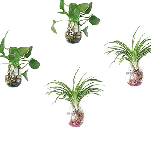 Set of 4, Wall Planters Hanging Planters Air Plant Terrariums Hanging Glass Air Plant Container Plant Pots Water Planter Glass Hanging Planter Plant Terrariums