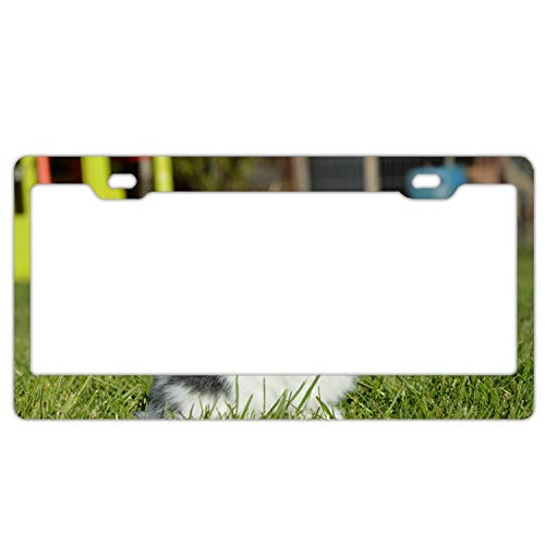 (SFHU Personalized License Plate Frame Rabbit Grass Spotted Cute License Plates Cover)
