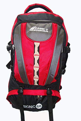 c82c2c00917 Camel Mountain 601 Red Backpack: Amazon.in: Bags, Wallets & Luggage