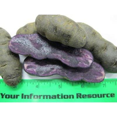 Fingerling Potatoes (Purple Fingerling - Avg 10 Lb Case)