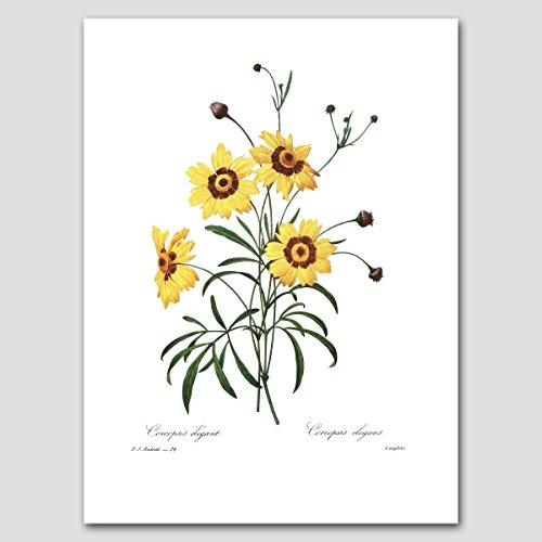 Daisy Art Print (Yellow Home Decor, Summer Cottage Artwork, Botanical Flower) Redoute -- Unframed