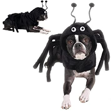 Amazon.com : Dog Costume - Spidey Paws Dog Spider Halloween ...