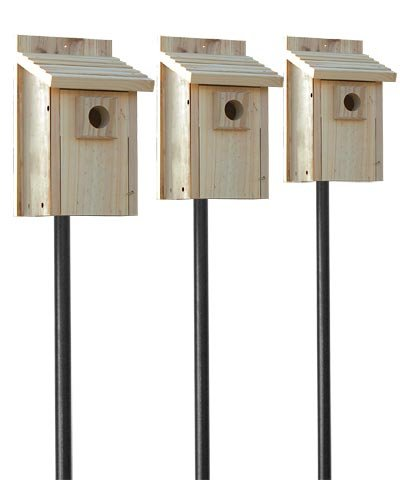 Stokes Bluebird House Package with Poles