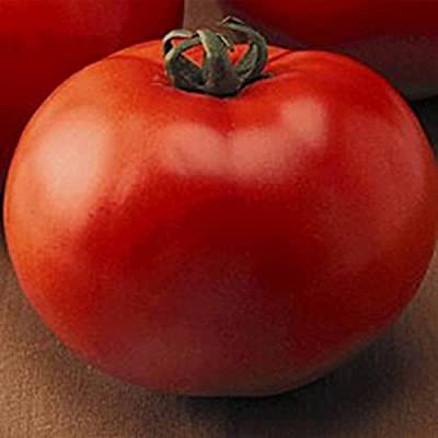 Tomato Garden Seeds - Goliath Hybrid - Non-GMO, Vegetable Gardening Seed