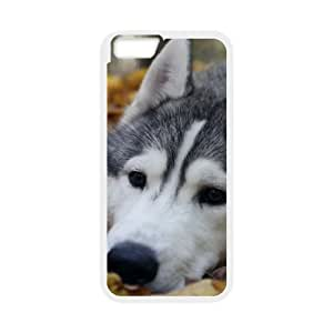 """Personalized Case for Iphone6 Plus 5.5"""" - Brave sled dog ( WKK-R-525255 )"""
