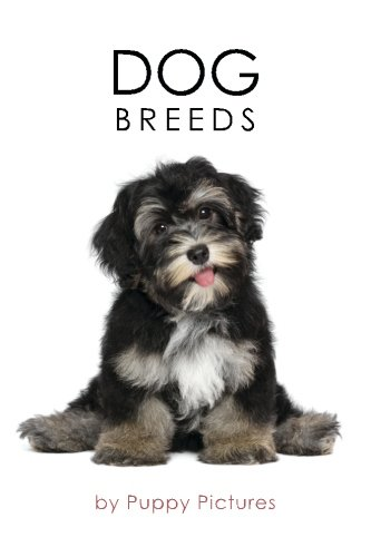 Dog Breeds: Havenese, Dachshund, Collie, German Shepard, for sale  Delivered anywhere in Canada