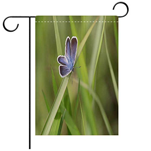 - BEICICI Garden Flag Double Sided Decorative Flags The Silver Studded Blue Best for Party Yard and Home Outdoor Decor
