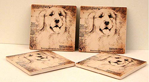 Golden Lab Coasters Set of 4