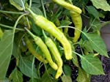 25 Charleston Hot Pepper Seeds- Organic chili, chile, great in salsa & hot sauce
