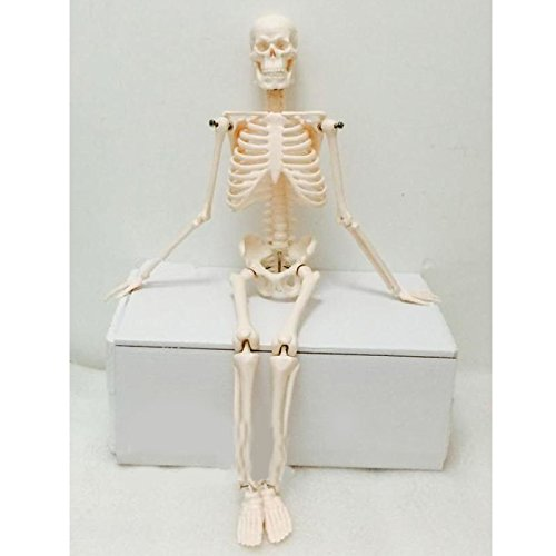 [해외]로이 17.7 \\ / Roy 17.7 Human Skeleton Model Teaching Aid Mini - Skeleton Model Learning Resources