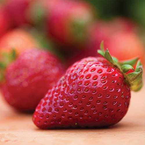 Burpee 'Seascape' Ever-Bearing Strawberry shipped as 25 BARE ROOT PLANTS by Burpee (Image #2)