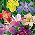 (2) Supreme Mix Lousiana Irises,Beautiful Foilage, Flower Rhizomes Visit Store#slc0034