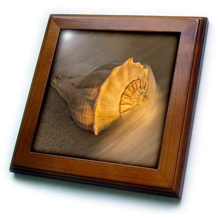 3dRose Danita Delimont - Seashells - USA, Florida, Sanibel Island. Lightning Whelk Shell on Beach Sand. - 8x8 Framed Tile (ft_314763_1)