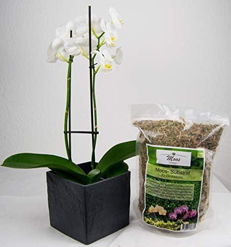 Granulat D/ünger Anzucht Substrat Sphagnum Moos Blumenerde 125g Orchideensubstrat Orchideenerde