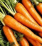 The Dirty Gardener Heirloom Danvers Carrots - 0.25 Pound