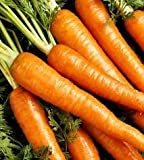 The Dirty Gardener Heirloom Danvers Carrots - 0.25 Pound