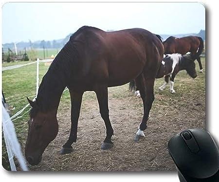 Alfombrilla de ráton de la Carrera de Caballos, caballería Animal de la Agricultura, Estera del ratón del Caballo