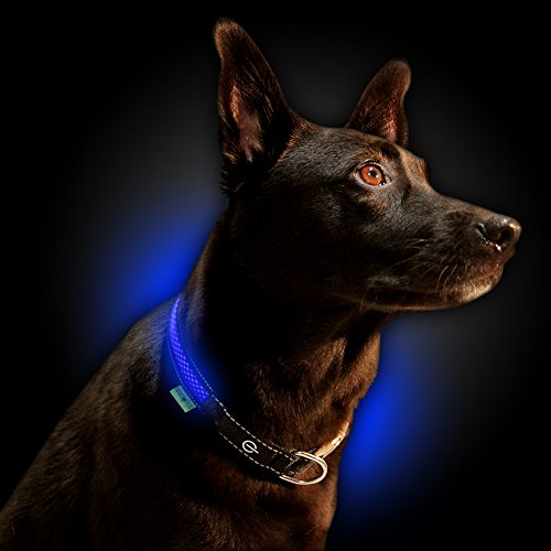 NINJA PETS Metal Buckle LED Dog Collar, USB Rechargeable, for Small Medium Large Dogs, Dog Collar Lights for Night Time Safety, Quick Release (Medium, Royal Blue)